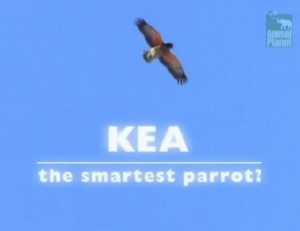 Kea-The-Smartest-Parrot-Cover