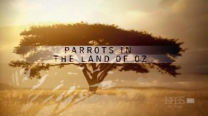 Parrots-In-The-Land-of-Oz-Cover